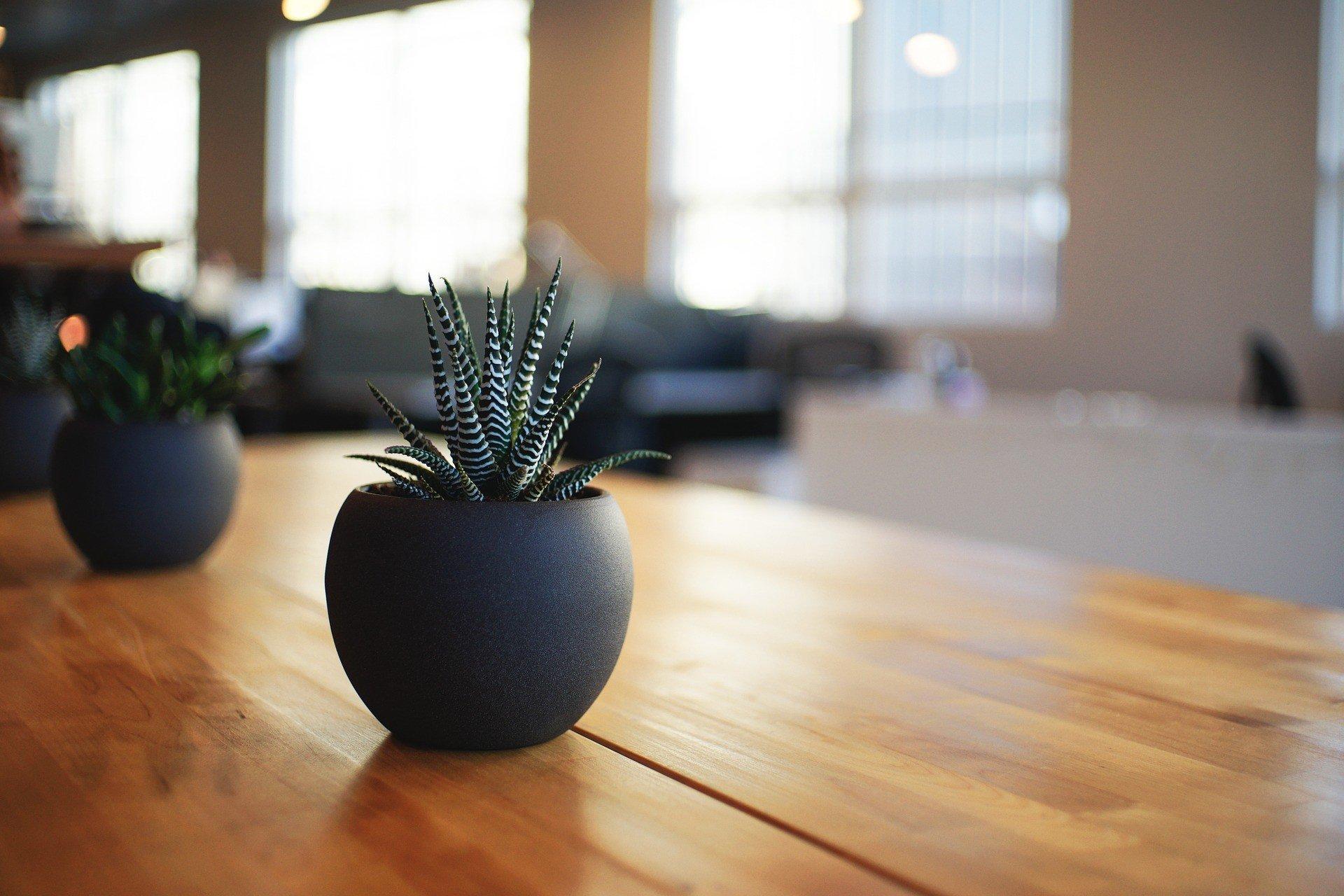 plant 1081856 1920 1